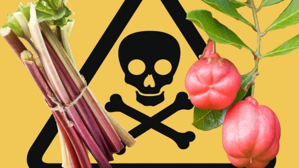 Нужно избегать: диетологи назвали самые опасные для здоровья диеты