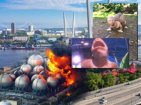 Фабрика чудовищ Нибиру: Мутанты с Фукусимы вторглись в Приморье