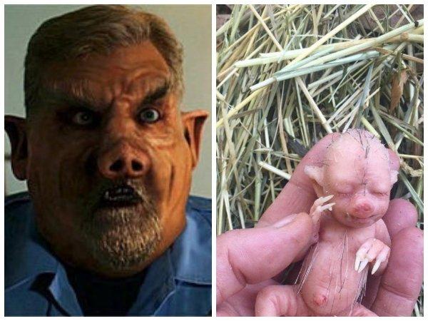 Ребёнок-свинорыл родился в Красноярске: Пришельцы с Титана выводят «волосатых свиней»