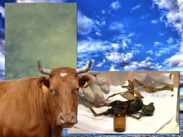 Разносчик сибирской язвы: Беса-отравителя с Нибиру выловили в Байкале
