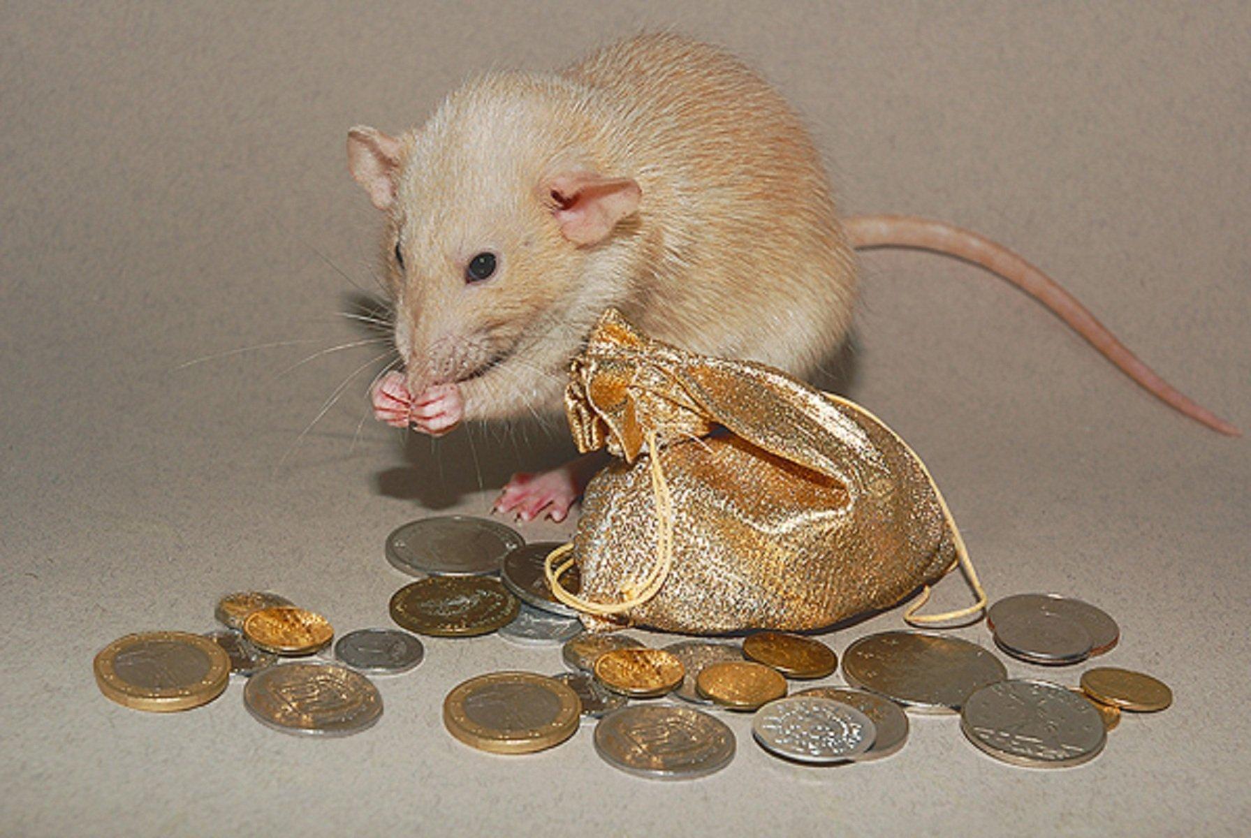 картинки золотой мышки веранду