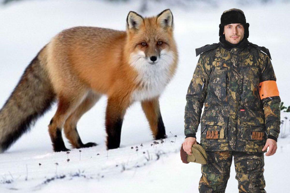 Истории охоты на лису зимой