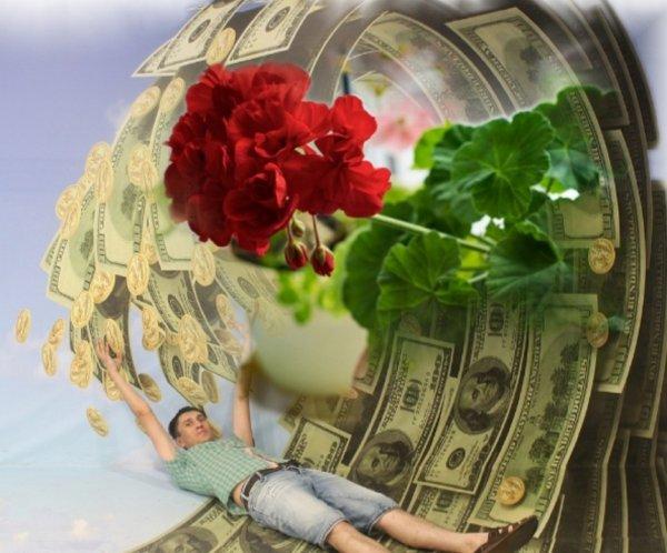 Денежный фонтан: Какой цветок притягивает богатство в дом?