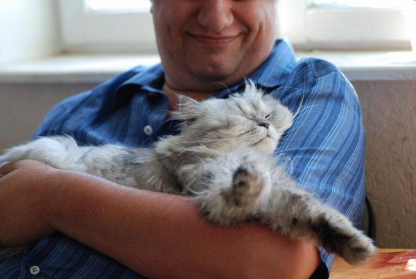 Кошка в доме – к добру: Питомец поможет обзавестись успехом