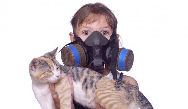 Первые симптомы аллергии на кошек и собак у детей назвал аллерголог