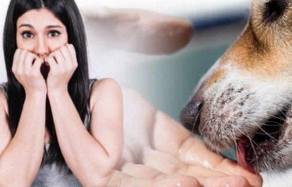 Опасный знак: Почему собака лижет руки хозяина?