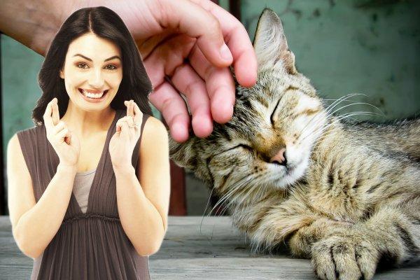 Навстречу удаче: Зачем гладить кошку перед выходом из дома