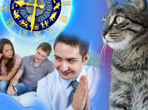 Тест на дружбу или как коты укажут на врагов в компании гостей 18 марта
