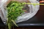 """В рамках операции """"Мак"""" тюменские полицейские ежедневно изымают наркотики растительного происхождения"""